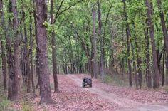 Drive Across Madhya Pradesh!
