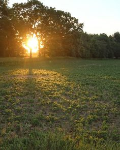 Sunrise this morning in Plainfield Michigan.  #photography #photo #scenic #beautiful #landscape #sun #sunrise #Michigan #puremichigan #outdoors #travel #light #nature #soybeans #haze #hazy #summer #green #trees