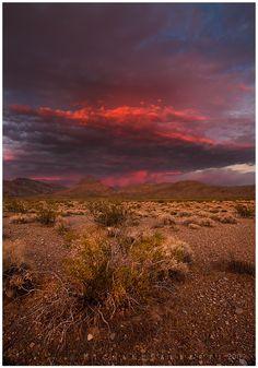 ✯ Mojave Desert, Nevada