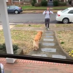 Dog happy to see boy or non-binary teen Dog jumps into person's arms Golden retriever Charater inspiration Cute Funny Animals, Cute Baby Animals, Funny Dogs, Animals And Pets, Wild Animals, Funny Humor, Cute Puppies, Cute Dogs, Dogs And Puppies
