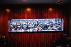 wall-aquarium (64)