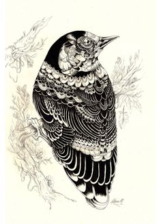 illustration by Iain Macarthur -drawing inspiration :) Art And Illustration, Illustrations And Posters, Animal Illustrations, Doodles Zentangles, Wow Art, Bird Art, Oeuvre D'art, Doodle Art, Painting & Drawing