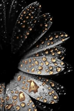 black and gold water droplets