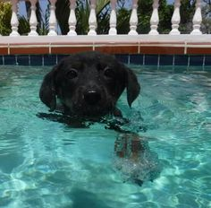 Day 15: I know how to sit and stay so we moved on to the breast stroke. I did a great job!