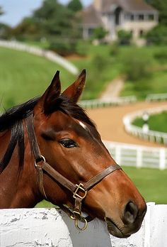 Lexington Kentucky - A Handsome Profile by David Paul Ohmer