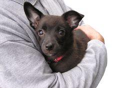 Dogs Really Don't Like Hugs, Study Finds - GossipTrend