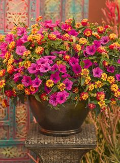Bright, bold, hot colors really catch the eye in this combination called 'Caribb. - Bright, bold, hot colors really catch the eye in this combination called 'Caribbean Day' - Container Flowers, Container Plants, Container Gardening, Succulent Containers, Outdoor Pots, Outdoor Flowers, Outdoor Flower Planters, Summer Flowers, Beautiful Flowers