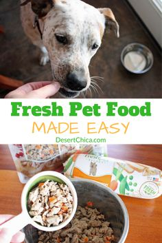 home cooked pet meals it s easy healthy cook meals dog and cat