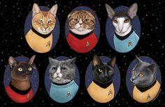 Star Trek Katzen 11 x 17 Poster