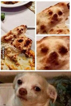 22 Funny Animal Pictures Of The Day - Funny Animals - Daily .- 22 Funny Animal Pictures Of The Day – Funny Animals – Daily LOL Pics 22 Funny Animal Pictures Of The Day - Funny Animal Jokes, Crazy Funny Memes, Really Funny Memes, Stupid Memes, Memes Humor, Stupid Funny Memes, Funny Animal Pictures, Funny Relatable Memes, Wtf Funny