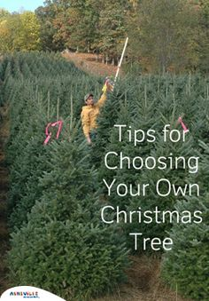 Tips for Choosing Your Own Christmas Tree | ExploreAshevlle.com