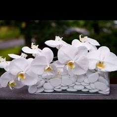 White orchids in wedding decor