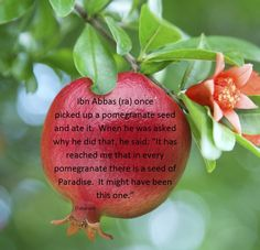 Every pomegranate has a seed of Paradise.