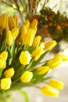 The Heartbook - potterybarn: Yellow tulips feel so springy Exotic Flowers, Amazing Flowers, My Flower, Fresh Flowers, Spring Flowers, Beautiful Flowers, Tulips Flowers, Spring Colors, Sunflowers
