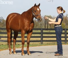 Teach Your Horse to Square up for Showmanship Classes~Perfecting this technique will give you an edge over the competition.
