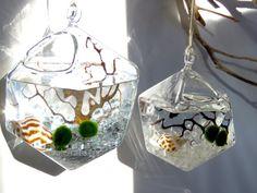 Hanging Geometric Marimo Moss Ball Terrarium: by TinyTerrains