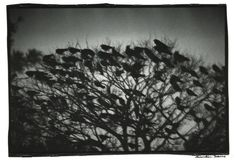 """<div class=""""artist""""><span class=""""artist""""><strong>Masahisa Fukase</strong></span></div><div class=""""title""""><em>Kanazawa,1977</em></div><div class=""""signed_and_dated"""">Signed on recto in ink & signed on verso in pencil</div><div class=""""medium"""">Vintage silver gelatin print</div><div class=""""dimensions"""">23 x 29.5 cm</div>"""