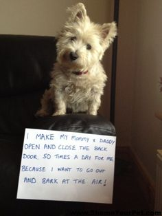 Dog Shaming westies so true! Cat Shaming, Funny Dogs, Funny Animals, Cute Animals, Funny Westies, I Love Dogs, Puppy Love, Pet Dogs, Dog Cat