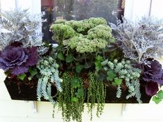 Image result for autumn flower boxes