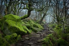 28 Magical Paths Begging To Be Walked | Bored Panda Padley Gorge, Peak District, UK
