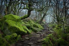 28 Magical Paths Begging To Be Walked | Bored Panda Padley Gorge, Peak District, UK