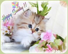 Kittens Cutest, Cats And Kittens, Cute Cats, Persian Kittens, Cat Food, Soft Colors, How To Do Nails, Android Apps, Wedding Cards