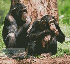Chimpanzees Cross Stitch Pattern http://www.artecyshop.com/index.php?main_page=product_info&cPath=1_2&products_id=46