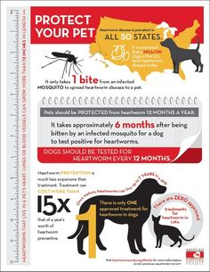 Remember to give your monthly heart worm preventative! Preventing Heartworm Disease