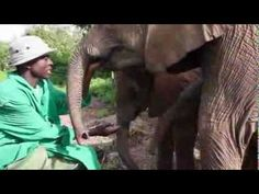 Watch the video of Balguda's rescue. He was spotted all alone, clearly in distress and is the latest orphaned baby elephant to be rescued by the David Sheldrick Wildlife Trust in Kenya.