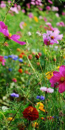 jardin de boille fleurs des champs