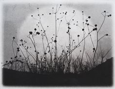 Etching, Moonrise, Charmed Meadow solarplate etching on handmade paper.  via Etsy.