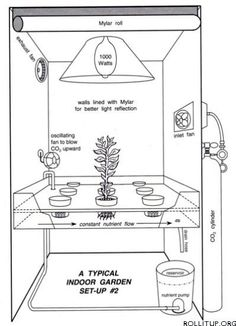 Hydroponics for indoor growing