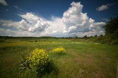 Лето в лугах - Летний пейзаж - Автор Артем Кашканов