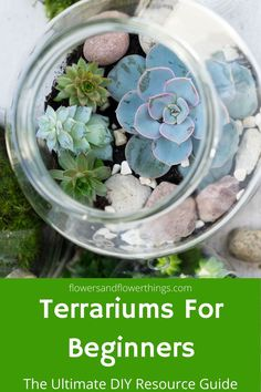Making a DIY terrarium is really easy. You can make them with easily available plants including succulents and air plants. Your terrarium can be any size you want from small ones that can be hanged to large ones. Succulent Terrarium Diy, Small Terrarium, Terrarium Containers, Succulent Soil, Planting Succulents, Planting Flowers, Succulents Online, Soil Layers, Rock Decor