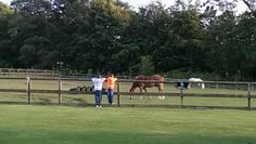 Clare Johnston  Saying hello to the ribby horses before the party