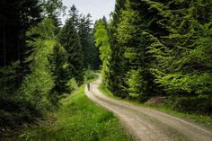 If you are a fan of gravel, Beskid Niski in Poland is a place you will like alot. We took the new Genesis Fugio to explore the lost and forgotten settlements. See more at Podia. Poland, The Good Place, Cycling, Things To Come, Country Roads, Lost, Fan, Explore, Adventure