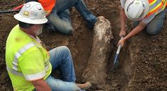 'Ice Age' Fossils Found In California Construction Site