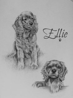 Ellie the #Cocker #Spaniel sketch. A piece done of her as a #puppy & as an adult. http://www.gensart.net