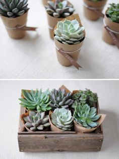 eco-friendly party favor or hostess gift: wrap small plant pots with kraft paper and secure with a piece of twine