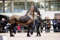 Pretty sure this is a Friesian. What do you think? Clipped Horses Learn about #HorseHealth #HorseColicwww.loveyour.horse