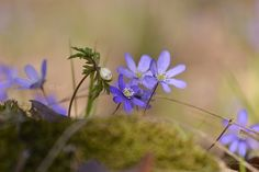 Spring <3 #naturelove :)