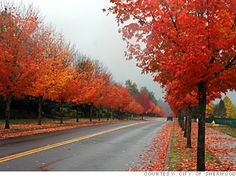 Sherwood, Oregon. Away from it all, 12 Miles from Beaverton. Population 17,000.