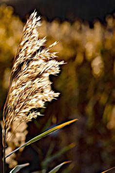 #nature #mindfulness #photography #poster #art #painting #brown #autumn #photo about life #luonto #kaunis #yksinkertaista #suomi #valokuvaus