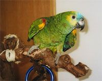 A way to prevent your furniture and woodwork from becoming a work of customized bird art is to provide your pet bird with plenty of entertaining toys and objects to chew on.