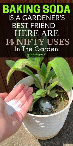Garden Yard Ideas, Easy Garden, Lawn And Garden, Garden Projects, Garden Soil, Growing Vegetables, Growing Plants, Household Plants, Household Items