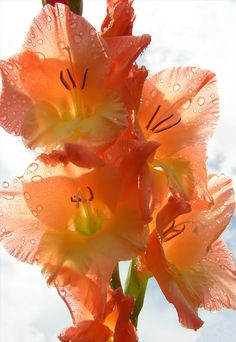 I want the august birth flower, gladiolas, for a tattoo!