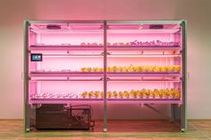 Able to grow 288 plants at a time in a roughly 16.5' by 5.5' frame, the Click & Grow Smart Farm is ideal for urban and rural homes alike. It has three levels, each with integrated automated watering and lighting...