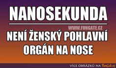 Chuck Norris, Motto, Jokes, Funny, Meme, Random, Husky Jokes, Memes, Animal Jokes