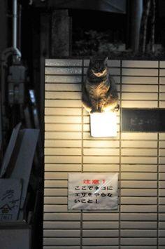 ここで猫に餌をやらないこと