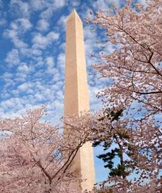 Washington Monument : Though admission into the monument is free, tickets are required and long lines form to get inside every day. A better bet: enjoy the exterior of the monument from the steps of the Lincoln Monument, or from the tidal basin during the National Cherry Blossom Festival in April.
